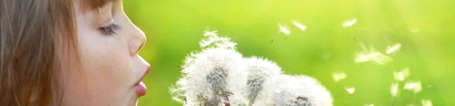 Fillette soufflant sur une fleur de pissenlit